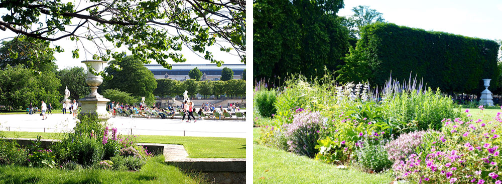 Flowers in the Tuileries garden
