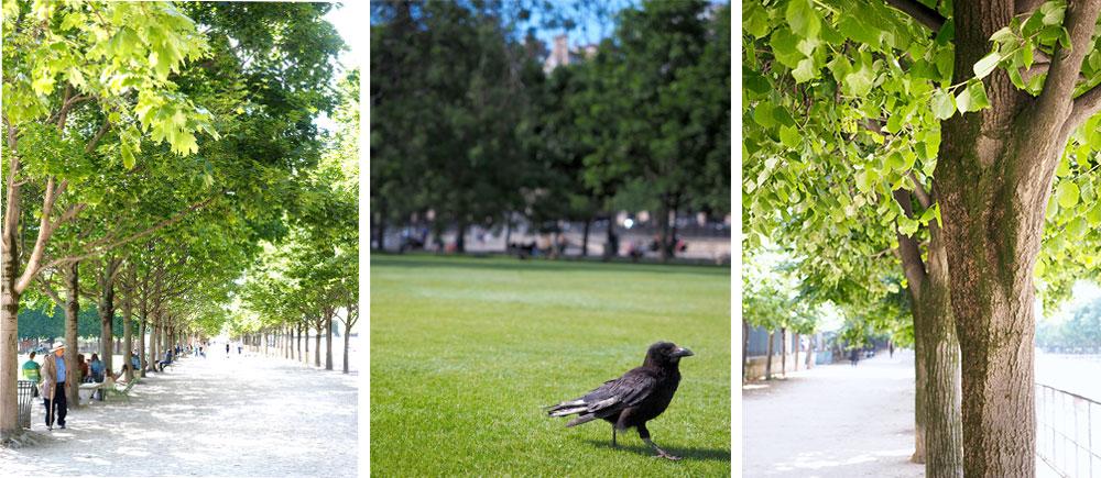 Variations de vert au jardin des Tuileries