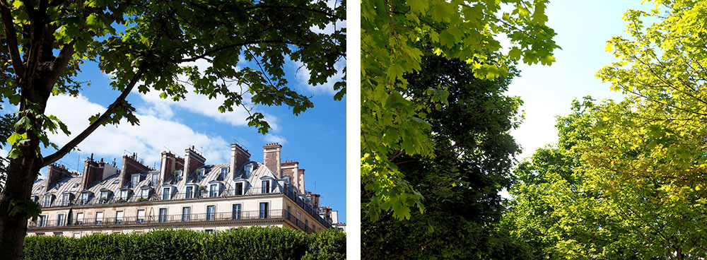 Trees in the Tuileries garden